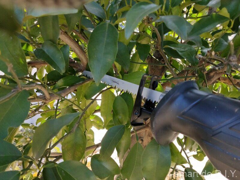 柚子 剪定