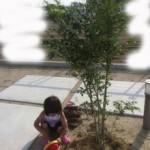 育てる庭でコスト削減!シマトネリコの例(植栽DIY)