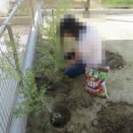 植栽DIYその2 将来はきっと生け垣になるはず・・・